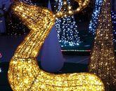 Новый год в Киеве-496208332
