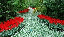 Уикенд в Нидерландах + парад цветов Блюменкорсо