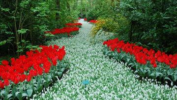 Уикенд в Нидерландах + парад цветов Блюменкорсо-1820354628
