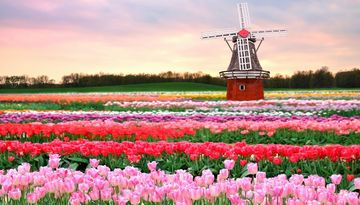 Тур Берлин – Амстердам – парк цветов Кекенхоф – Познань-2097453280