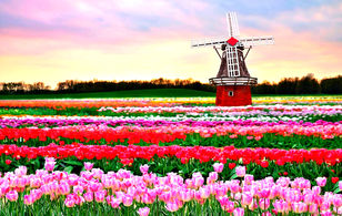 Берлин - Магдебург - прак цветов Кекенхов* - Амстердам - Познань (без ночных переездов)-832450603