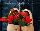 Уикенд в Нидерландах + парад цветов Блюменкорсо-646431831